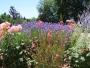 Craquer pour un jardin à l'anglaise