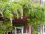 Élément décoratif du jardin : la tonnelle