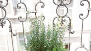 Astuce : cultiver des plantes aromatiques sur son balcon