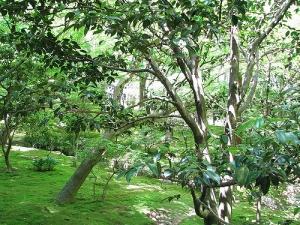 jardin-luxuriant