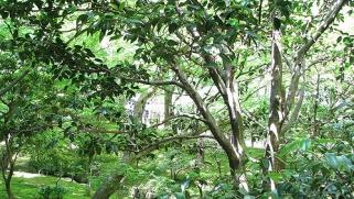 Astuces pour un jardin décoratif luxuriant