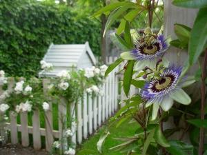 jardin-romantique-lignes