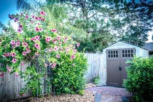 jardin-romantique-plantes