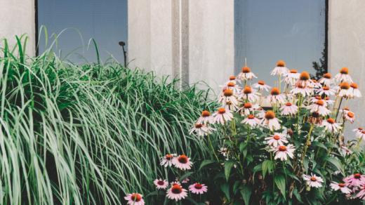 Plantes et fleurs devant mur béton maison moderne