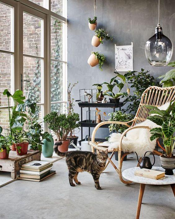 Une véranda garnie de plantes